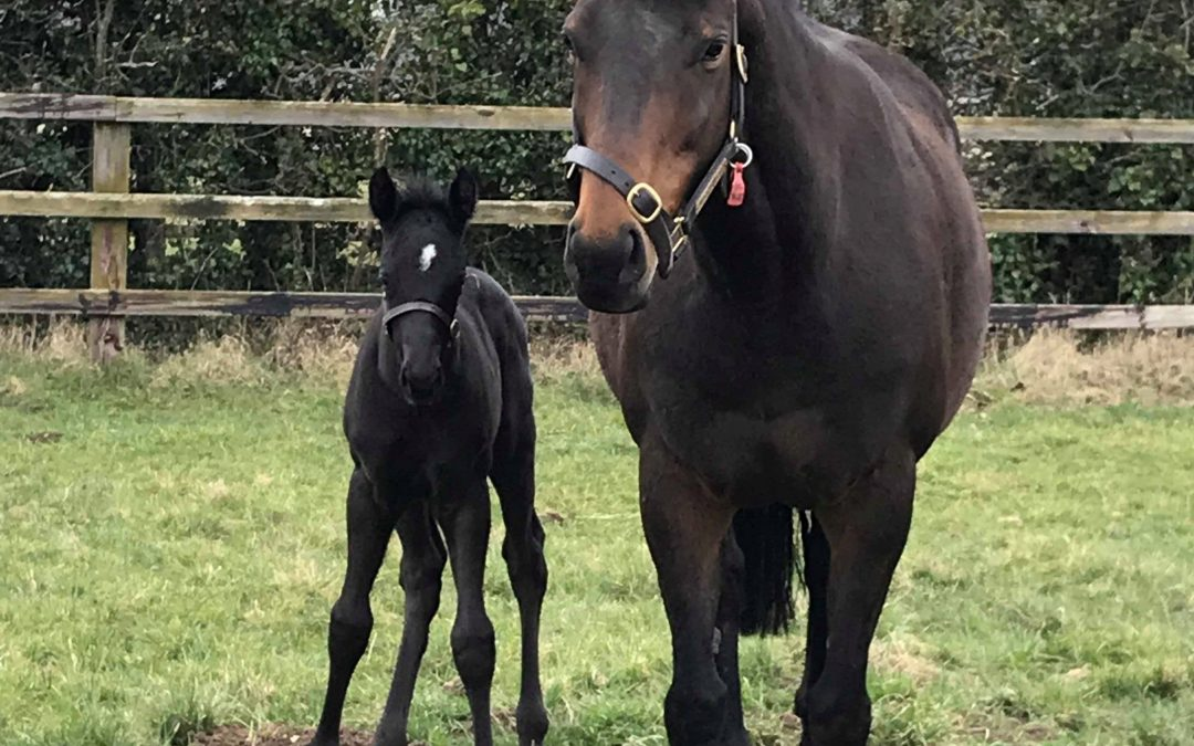 Five new foals during inspirational work experience