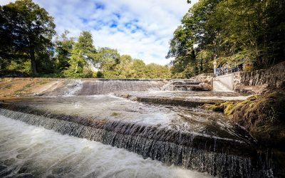 Buckfast Abbey opens 'un-holey' fish pass in battle to boost salmon on the River Dart